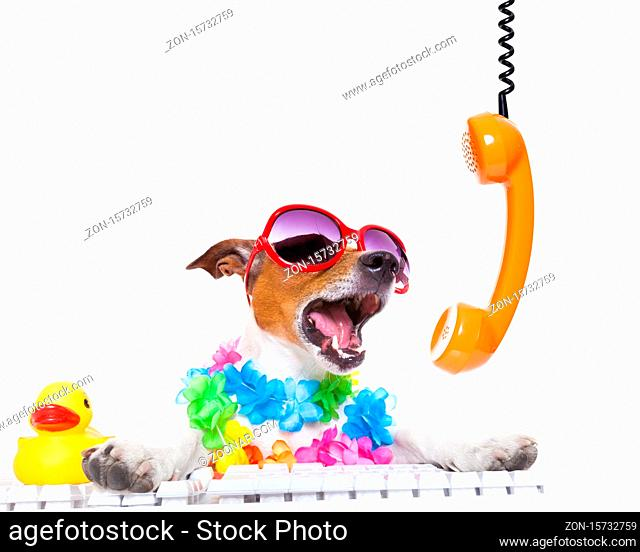 jack russell dog booking summer vacation holidays online using a pc computer keyboard, while shooting on the phone very loud