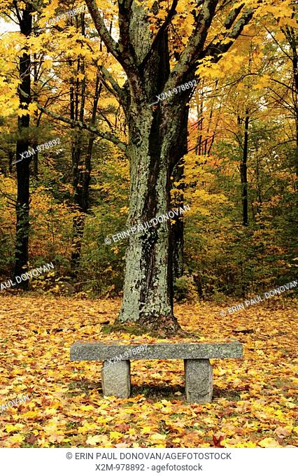 Granite bench in a maple forest during the autumn months in scenic New Hampshire USA, which is part on New England