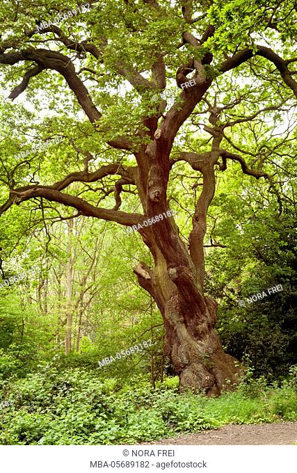Great Britain, London, tree, park, garden, spring
