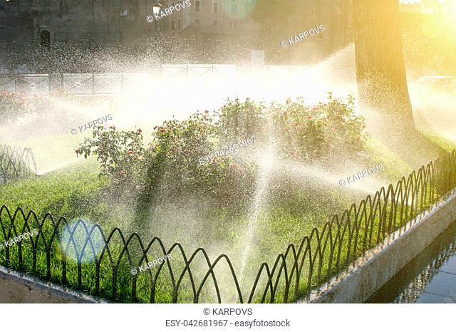 Summer. Italy. Rome. Lawn watering. Watering the flower beds