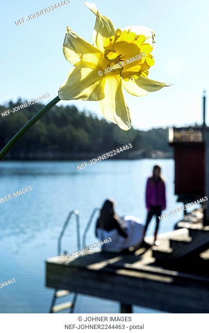 Daffodil, people at lake on background