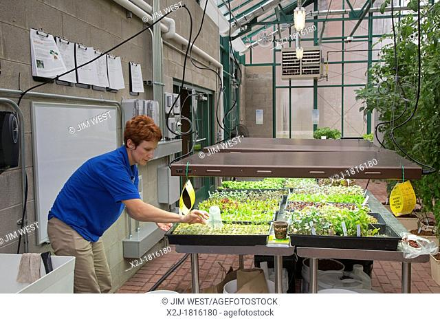 West Bloomfield, Michigan - Resident farmer at Henry Ford West Bloomfield Hospital, waters seedlings in the hospital's greenhouse  The organic produce is grown...