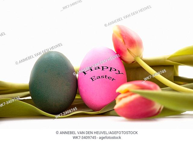 Easter eggs with tulips flowers on white background and text happy easter isolated