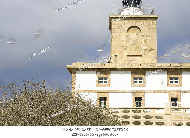 Flying seagulls and Lighthouse in Tabarca, is an islet located in the Mediterranean Sea, close to the town of Santa Pola, in the province of Alicante
