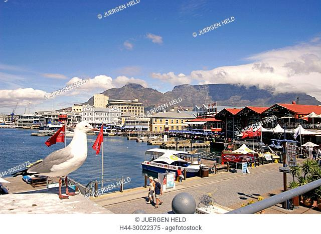 south africa cape town,Victoria Albert waterfront, pier,gull