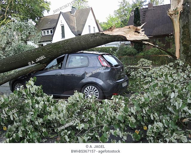 tree fallen on a parked car, damages by storm front Ela at 2014-06-09, Germany, North Rhine-Westphalia, Ruhr Area, Bochum