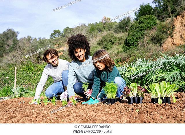 Family planting lettuce seedlings in vegetable garden