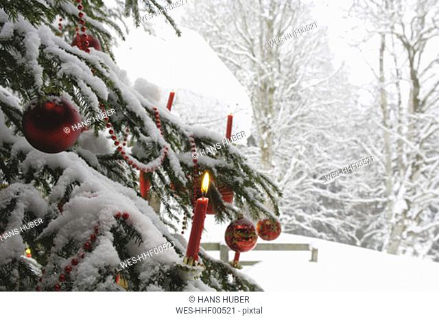 Christmas tree in snow, close-up