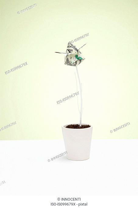 Origami us dollar banknote in plant pot