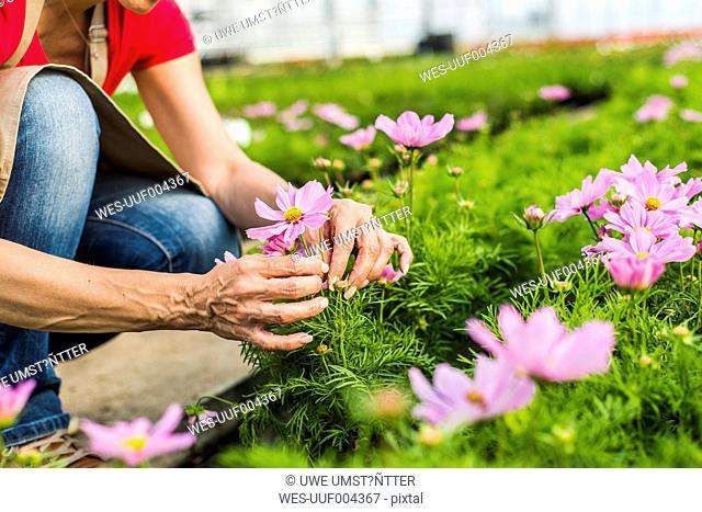 Woman in nursery examining flower
