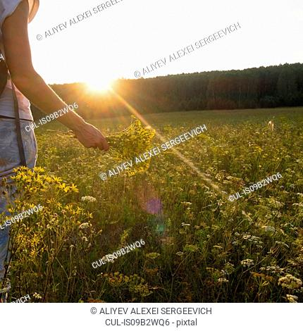 Cropped view of woman in wildflower meadow holding bunch of flowers, Ural, Russia