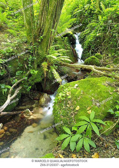 Sot de L'Infern small stream at Arbucies village countryside. Montseny Natural Park. Barcelona province, Catalonia, Spain