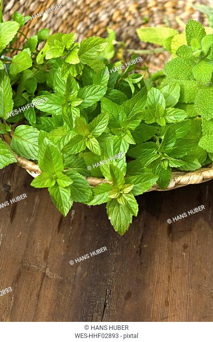 Austria, Salzburger Land, Peppermint Mentha piperita plant, close up