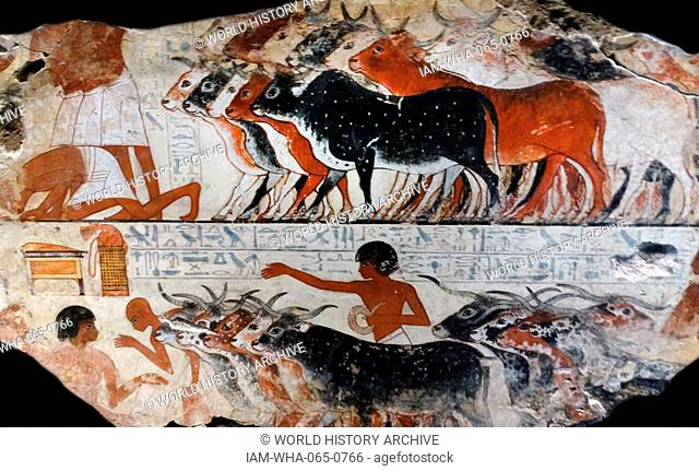 Fresco from the tomb of Nebamun, Fragment of a polychrome tomb-painting showing cattle with their farmers from the presentation of the geese scene