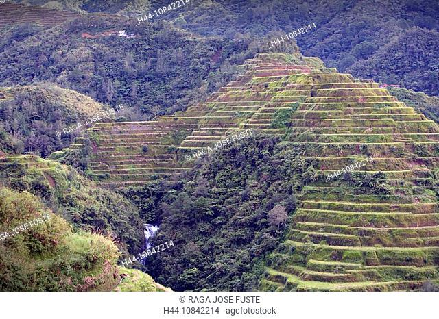 Philippines, Banaue Rice Terraces, Luzon Island, Cordillera District, Near Baguio City, Rice, November 2007, Asia, fie