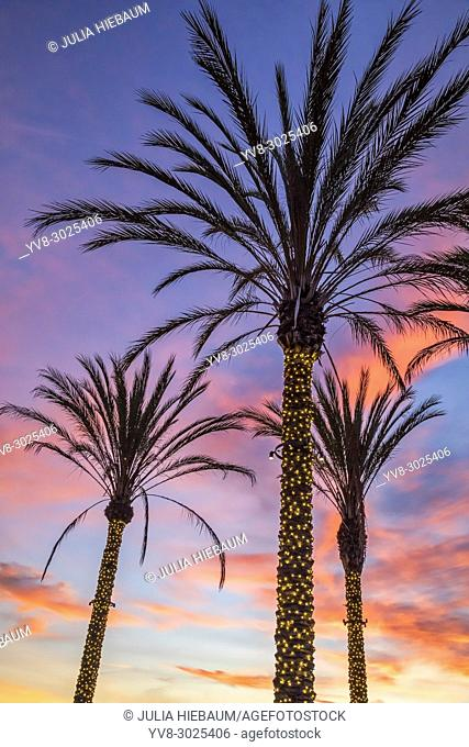 Three lighted palm trees in La Jolla, California