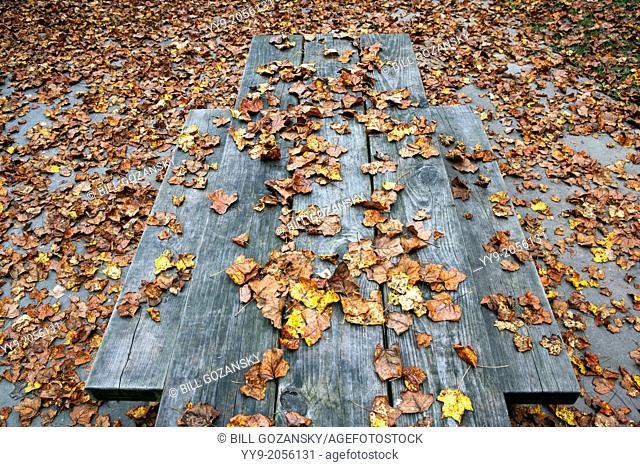 Fall leaves on Picnic Table - Pisgah National Forest - near Brevard, North Carolina USA