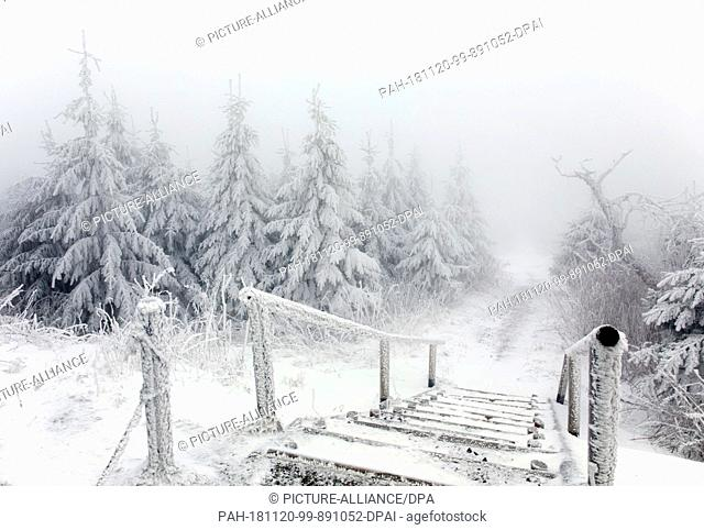 19 November 2018, Saxony, Oberwiesenthal: Snowed-in trees can be seen at frosty temperatures on the Fichtelberg. New snowfall is expected in parts of Saxony and...