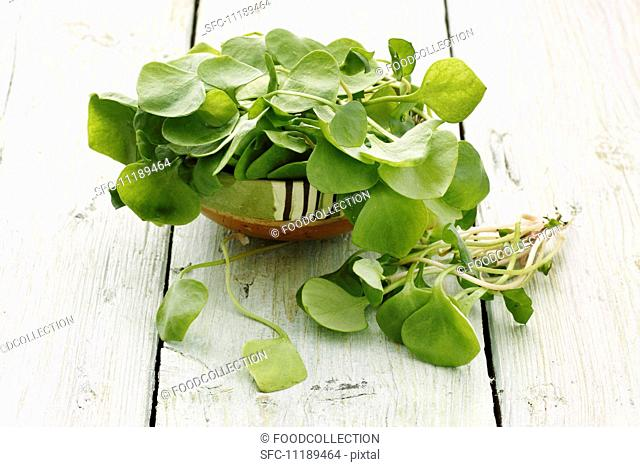 Purslane in a bowl on a wooden surface