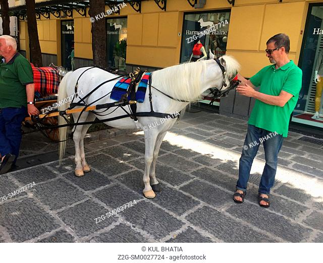 A visitor pets a horse attached to a carriage in Sorrento while it waits for business in the city center. The horse seems to respond to the attention and gentle...