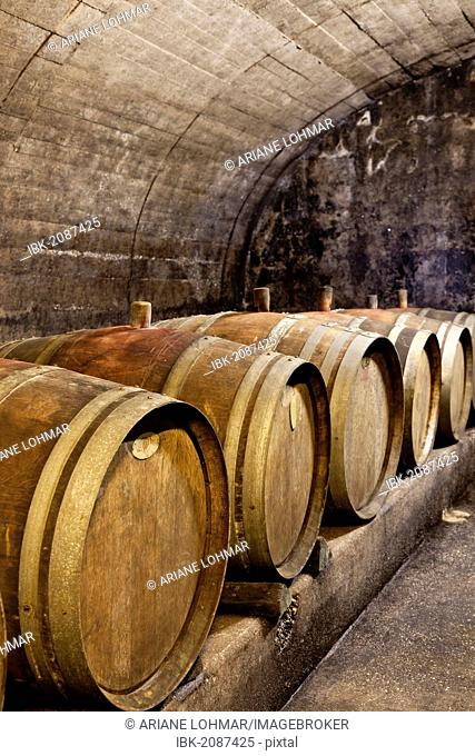 Old wine barrels in the cellar of a winery