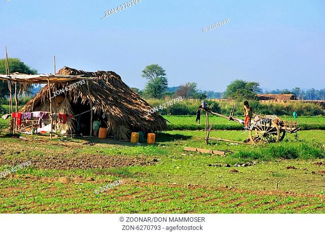 Thatched hut in a farm field, Amarapura, Mandalay