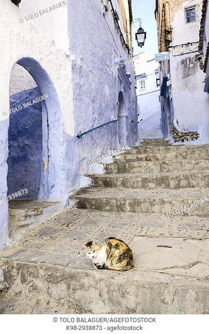 Cat in a blue alley, Chefchauen (Chauen), Morocco, Northern Africa