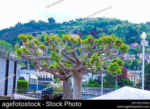 The view of Como lake at Bellagio at Italy