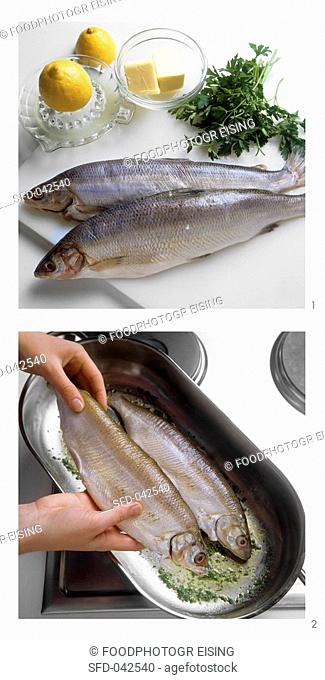 Preparing whitefish, Fisherman's style