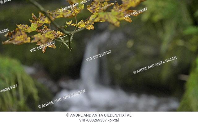 Waterfall behind autumn leaves, rack focus
