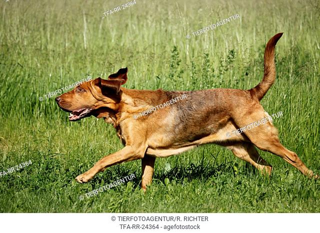running Bloodhound
