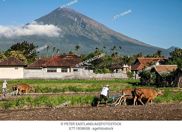 Ploughing fields near Amed with Gunung Agung volcano in the background, Eastern Bali, Indonesia