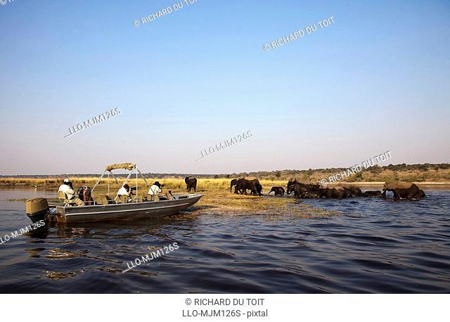 Safari boat trip participants watching elephants, Chobe River, Botswana