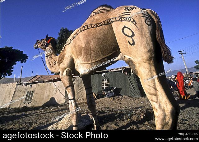 atmosphère sur les campements, Camel Mela à Pushkar, rajasthan, inde 2005