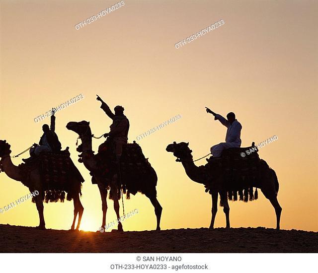 Caravan camel, Egypt