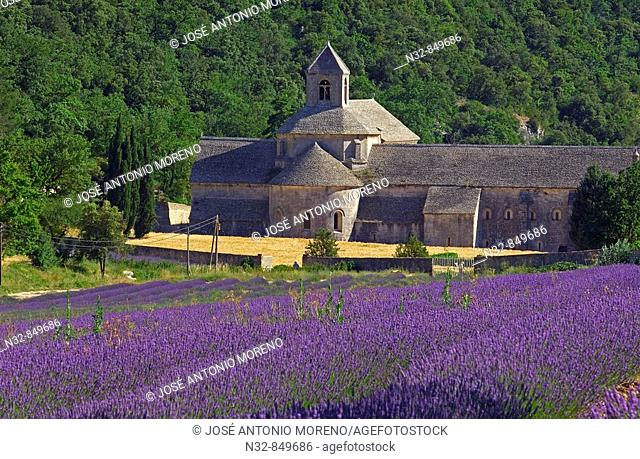 Lavender fields and Senanque abbey, Gordes, Vaucluse, Provence, France
