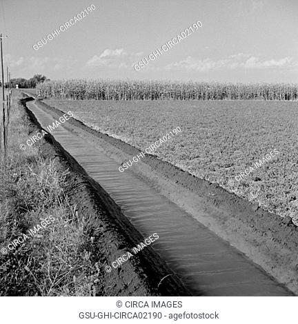 Irrigation Ditch Running Through Alfalfa and Corn Field, Farm Security Administration (FSA) Cooperative, Waterloo, Nebraska, USA