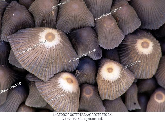 Mushrooms, Willamette Mission State Park, Oregon