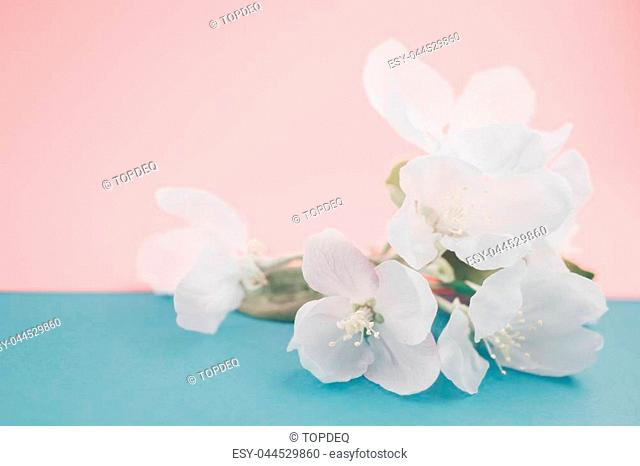 Apple blossoms over blurred color background. Spring flowers creative macro image with bokeh. Shallow depth of field. Spa and wellness concept