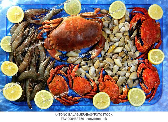 Crabs tellin shrimp clams and lemon seafood still life