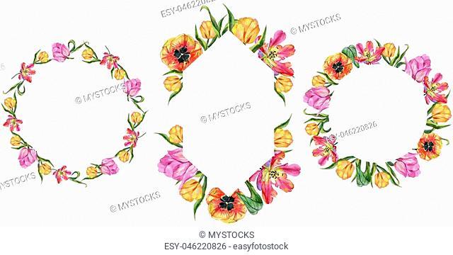 Colorful summer tulip. Floral botanical flower. Frame border ornament square. Aquarelle wildflower for background, texture, wrapper pattern, frame or border