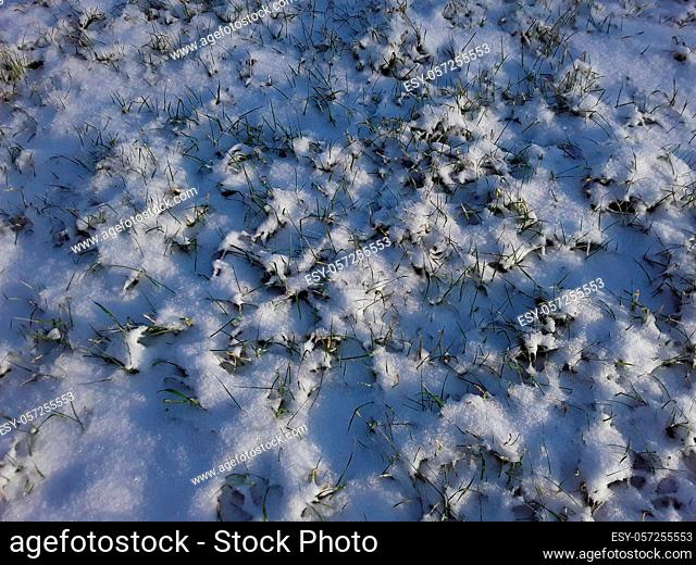 Winter snow texture on ground and the plants
