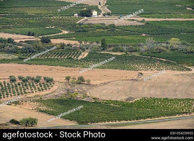 campo de cultivo, Ausejo, La Rioja , Spain, Europe