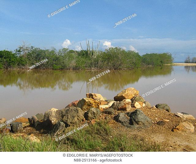 Xerophyte vegetation at Laguna de Unare, Venezuela