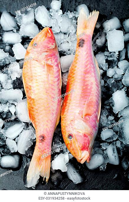 Raw fish, Red mullet fish on an ice cubes on a black stone board plate
