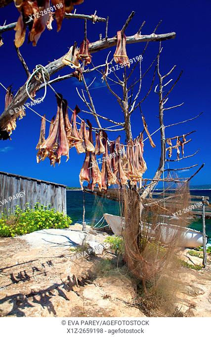 Peix Sec fish, drying down the sun in the pier of Es Torrent de S'Alga. Formentera (Balearic Islands)
