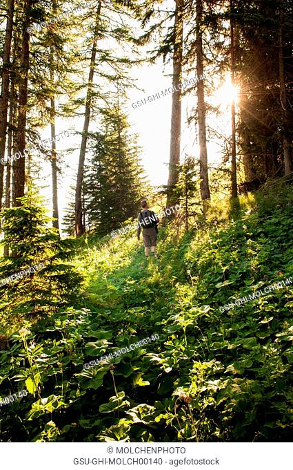 Man Hiking in Woods at Sunrise, Rear View