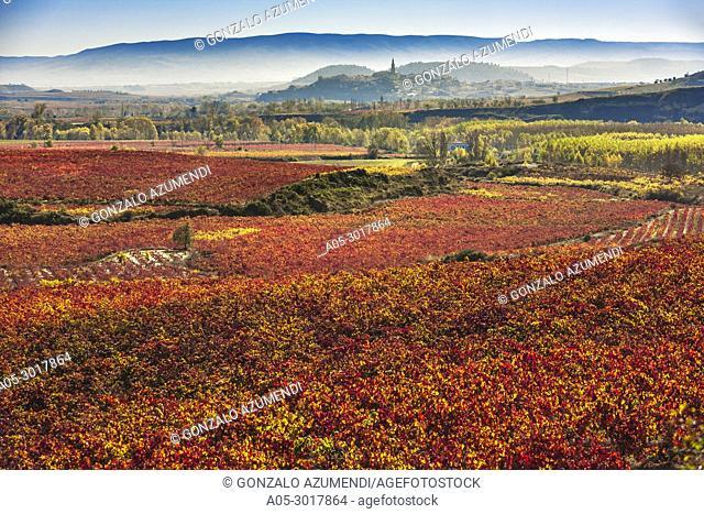 Vineyards in autum around Labastida in Rioja alavesa. In the background Briones village. La Rioja. Spain