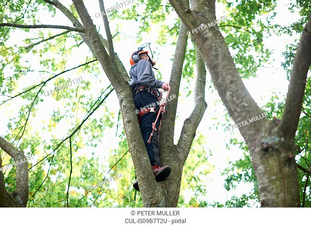 Young male trainee tree surgeon looking up from tree trunk