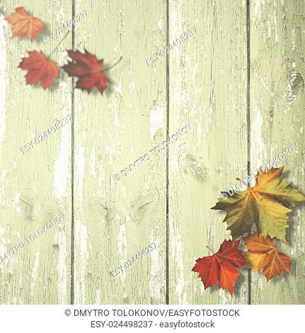 Abstract autumnal backgrounds with maple leaves over old wooden desk
